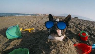 Photo of أفضل صور GoPro في العالم ، استعد لتفقد أنفاسك