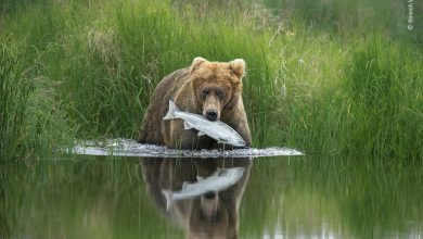 صورة إلقاء نظرة أولى على الفائزين بجائزة مصور الحياة البرية لهذا العام!