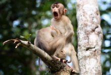 صورة هذه الصور الكوميدية للحياة البرية ستدمع عينيك!